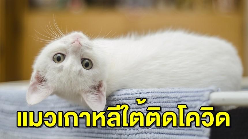 เกาหลีใต้พบแมวติดโควิดรายแรกของประเทศ คาดติดจากเจ้าของในโรงเรียนสอนศาสนา