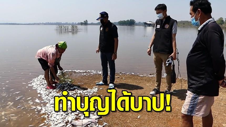 ทําบุญได้บาป! ปลาปริศนาตายเกลื่อนอ่างเก็บน้ำราชบุรีนับ 100 กิโล คาดคนเอามาปล่อยหวังทำบุญวันมาฆบูชา