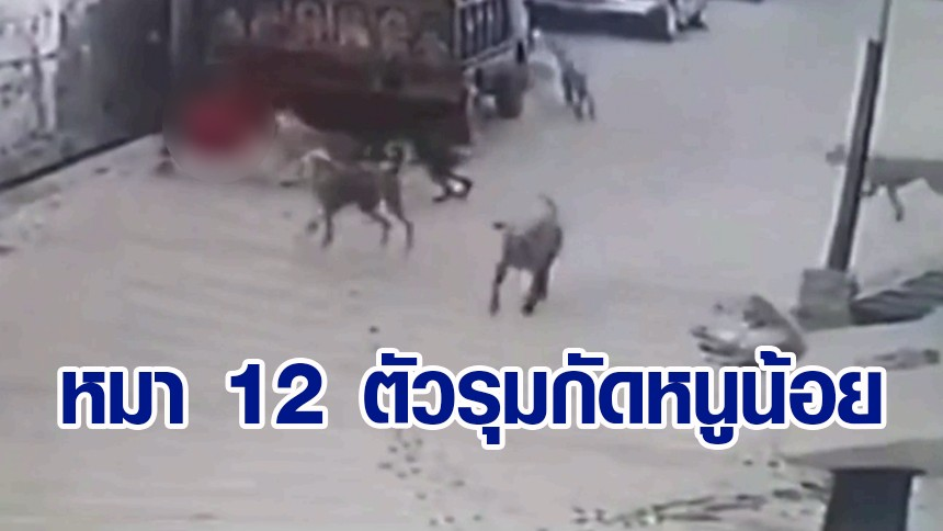 สะบักสะบอม! หนูน้อยอินเดีย โดนหมาจรจัด 12 ตัวรุมกัด ลากไกล 4 เมตร