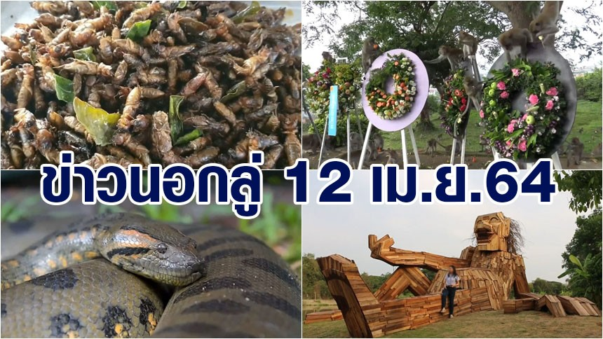 ข่าวนอกลู่ 12 เม.ย.64 ลิงแฮปปี้แห่กินพวงมาลาผลไม้ - ล่อจับแมงจีซอนมาคั่วกิน - ดินแดนลี้ลับ สวนสัตว์เปิดเขาเขียว