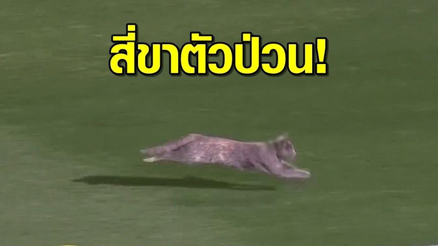 'เจ้าเหมียว' ตัวป่วนหลุดลงสนมฟุตบอล วิ่งวุ่นทั่วสนาม แฟนบอลเฮให้กำลังใจ
