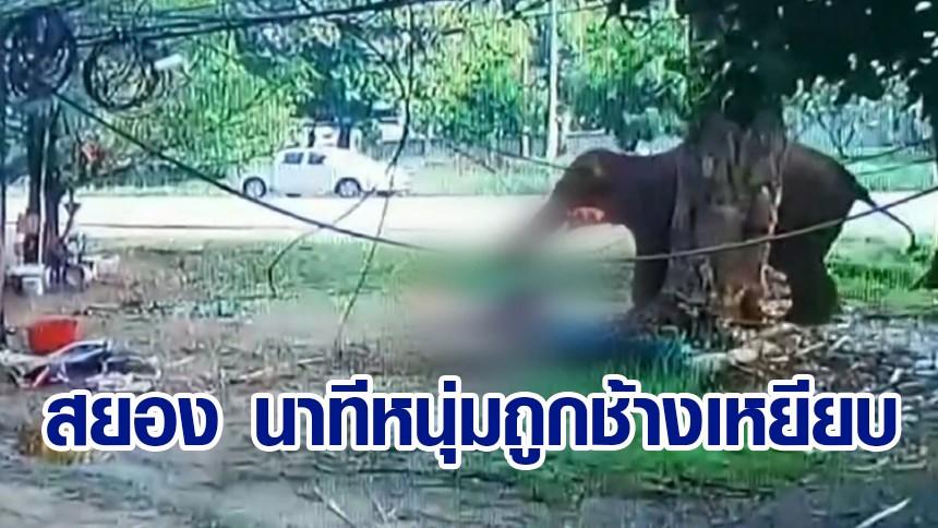 วงจรปิดจับนาทีสลด ชายจอดรถให้อาหารช้าง ถูกฟาดงวงใส่ล้มทั้งยืน ก่อนทำร้ายซ้ำจนเสียชีวิต