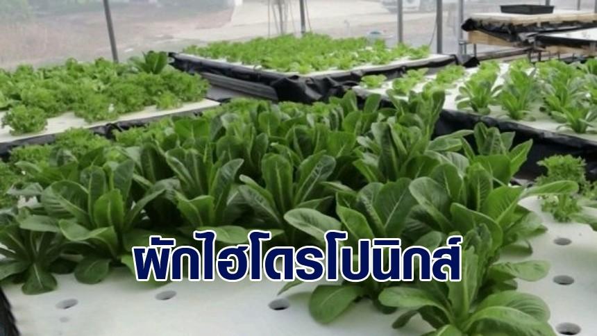 ตำรวจพิษณุโลก วางแผนใกล้เกษียณ ปลูกผักไฮโดรโปนิกส์ หารายได้เสริม