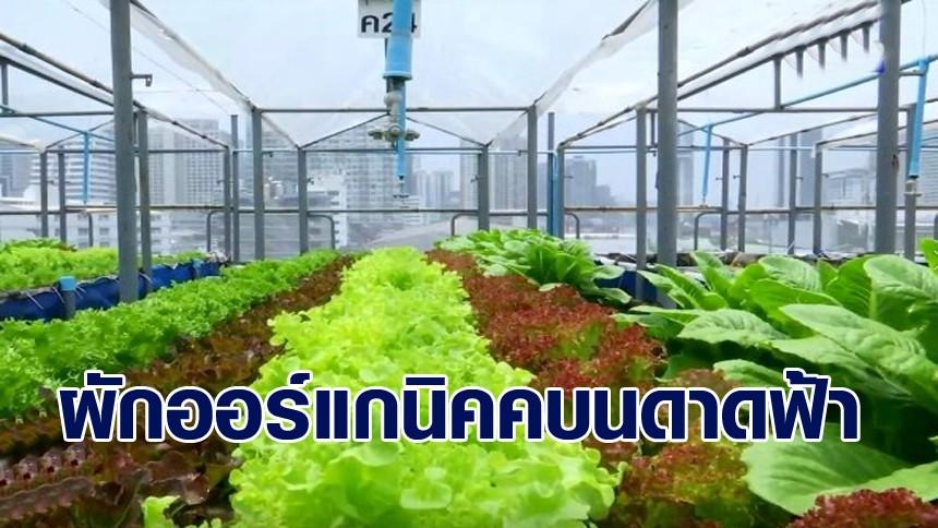 'Baanrim Rooftop Farm' ปลูกผักสลัดออร์แกนิคบนดาดฟ้า ขายรายได้งาม
