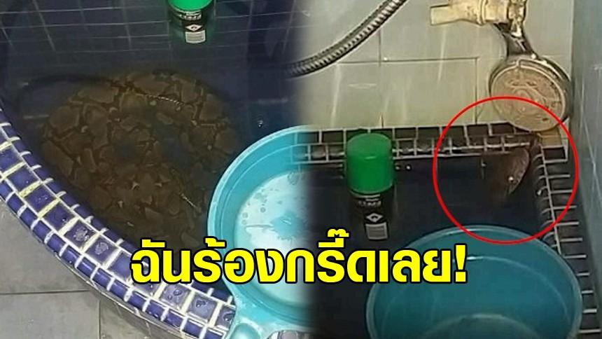 เข้าห้องน้ำต้องระวัง! 'งูเหลือม' บุกนอนขดตัวในอ่างน้ำ ใครเจอแบบนี้ก็ช็อก