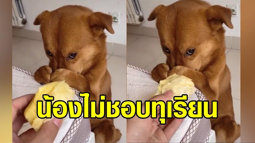 คลิปเรียกรอยยิ้ม น้องหมาไม่อิน ยกมือปิดจมูกเมื่อได้กลิ่นทุเรียน