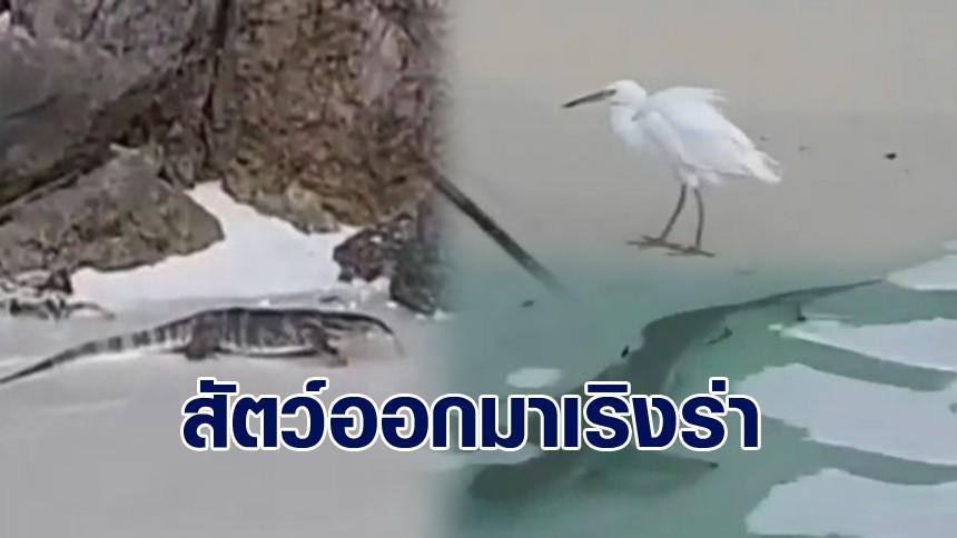 เหล่าสัตว์นานาชนิด ในหมู่เกาะห้อง ออกมาเริงร่า หลังปิดห้าม นทท.เข้ารบกวนโดยไม่มีกำหนด