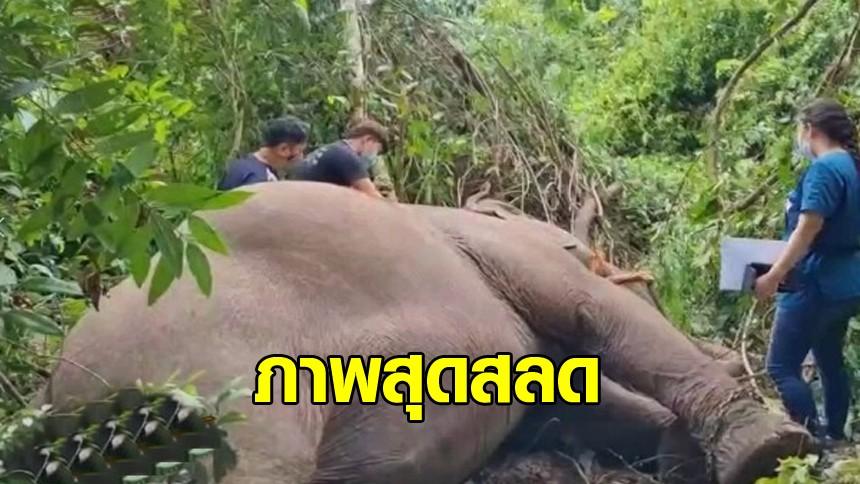 สลด! ควาญช้างร่ำไห้ ฟ้าผ่า 'พังบุญครอง' อายุ 40 ปี ตาย งู-ตุ๊กแก ตายด้วย