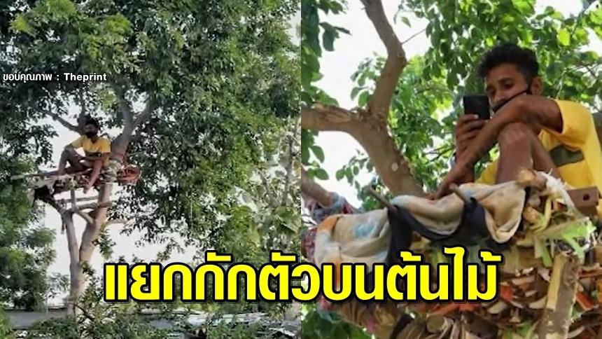 หนุ่มอินเดียใจหล่อ กักตัวบนต้นไม้ 12 วัน ห่วงเชื้อโควิดลามติดคนในบ้าน