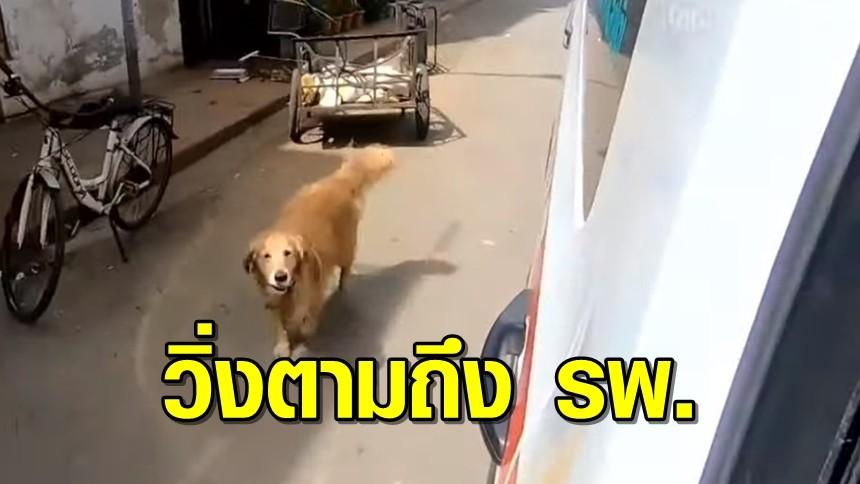 คลิปน้องหมาโกลเดนแสนรู้ ห่วงเจ้าของป่วย ขึ้นรถไปด้วยไม่ได้ เลยวิ่งตามไปถึง รพ.