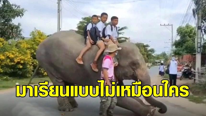ไปโรงเรียนให้โลกจำ! ขี่ช้างไปเรียนเก๋ๆ สมกับเป็นเมืองสุรินทร์ถิ่นช้างใหญ่