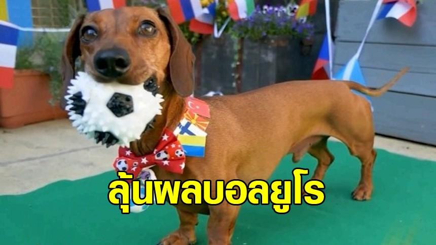 มาดู 'น้องหมาไส้กรอก' เลือกกินฝั่งไหน ทายผลบอลยูโรคู่บิ๊กแมตช์ เยอรมัน vs โปรตุเกส