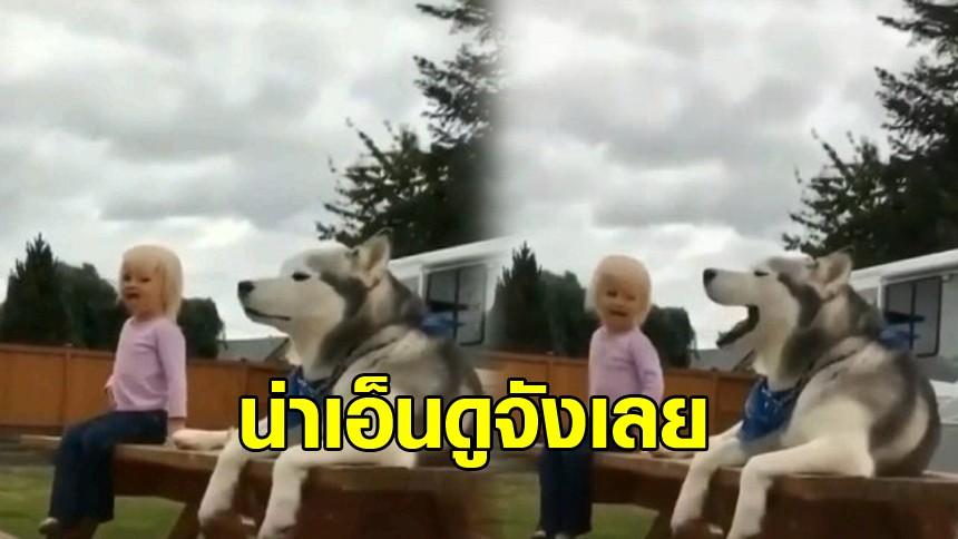 ปฏิกิริยาของเจ้าสุนัขไซบีเรียน เมื่อหนูน้อยร้องกรี๊ดเสียงดังลั่น ดูแล้วขำมาก