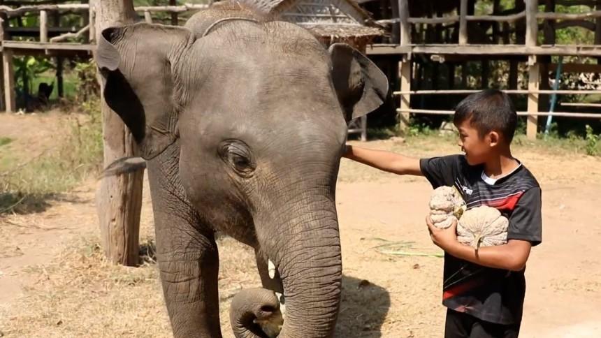 ทุ่งแสงตะวัน | ตอน เด็กกับช้างชรา | 27-03-64 EP.59